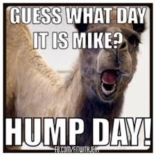 Hump Day Camel Meme - hump day camel geico humpday funny fitness motivation