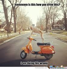 Dog Driving Meme - dog driving by flox meme center