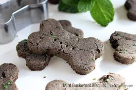 recipe for dog treats dog treats that ll make your pup wag with glee huffpost