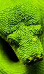 a green snake wallpapers snakes wallpapers android apps on google play