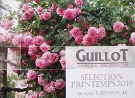 Achat Rosier Grimpant by Promesse De Roses Catalogue Roses Guillot Printemps 2014