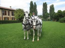 bianchi carrozze bellissima carrozza con cavalli bianchi foto di il pioppeto
