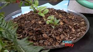 winterize your garden with help from ciscoe morris new day