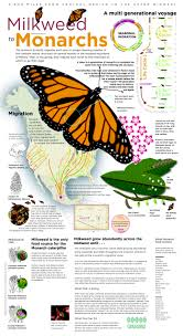 monarch design monarch butterfly journey visual ly