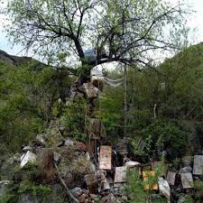 cremation tree the curious sky burials of tibet the curious collections of