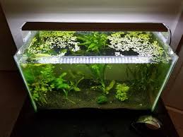 10 gallon planted tank led lighting chihiros a501 led light for 10 gallon planted aquarium 33w 4800