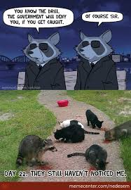 Funny Raccoon Meme - i m a raccoon memes best collection of funny i m a raccoon pictures