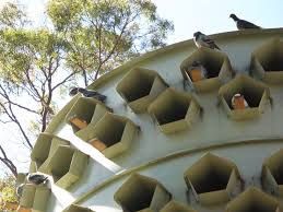 cool bird house plans awesome trap house plans pictures best inspiration home design
