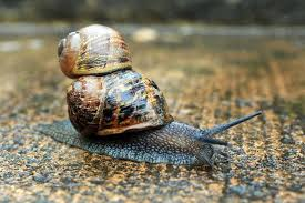 Where Can You Find Snails In Your Backyard Nine Facts You Never Knew About Snails They Have 14 000 Teeth And