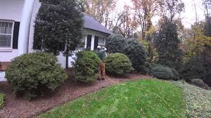 insect control for trees and shrubs youtube