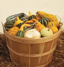 home page of nipomo pumpkin patch