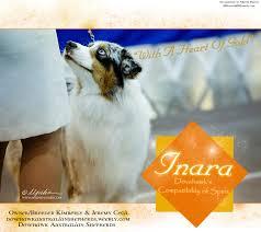 risk n hope australian shepherds faq asca