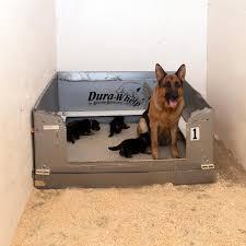 belgian sheepdog breeders michigan gallery vom jagerhaus west german shepherds llc