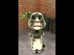 imagenes groseras de gatos el gato grosero youtube