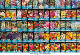 cheap seed packets flower seed packets in a shop stock photos flower seed packets