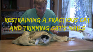 how to restrain a fractious cat and trim cat nails youtube