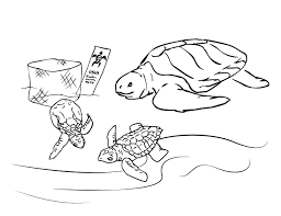 awesome turtle coloring pages cool gallery col 672 unknown