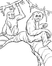 monkey coloring pages uniquecoloringpages coloring
