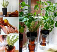Wine Bottle Planters by Wine Bottle Planter Watch The Video Tutorial The Whoot