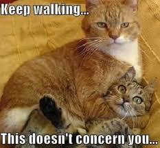 Funny Animal Memes Tumblr - funny animal memes tumblr nice pics