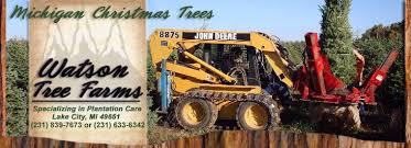 wholesale christmas trees watson tree farms