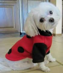 red ladybug halloween costumes for big dogs