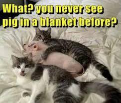 Funny Pig Memes - 15 very funny pig memes cutesypooh