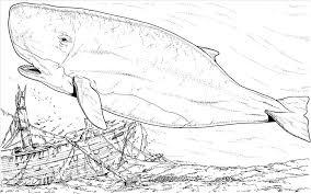 excellent whale shark coloring picture impressive