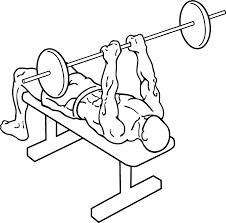 Triceps Bench Dips Triceps U2013 Mma Training Blog