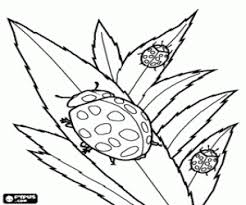 insects coloring pages insects coloring book insects printable