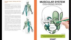muscular system coloring book youtube