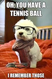 Oh You Dog Meme - oh you dog meme bigking keywords and pictures