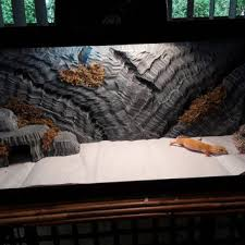 Vivarium Wood Decor Best Reptile Decor Products On Wanelo