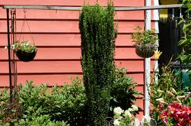 selecting the best shrubs to make hedges