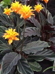 Low Light Indoor Flowers 29 Best Indoor Plants Low To Med Light Images On Pinterest