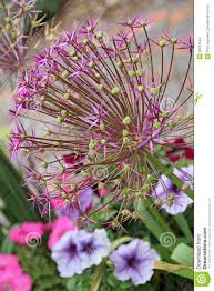 cottage garden flowers victorian cottage garden flowers stock photo image 32013144