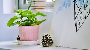 Bedroom Plants 13 Surprising Benefits Of Having Plants In Your Bedroom Cute
