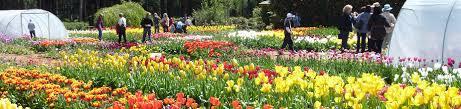 flowers u0026 gardens travel victoria accommodation u0026 visitor guide