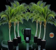 amazon com c a p monster 6 grow pot complete hydroponic system