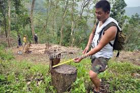 pbsp to continue to replant trees cebu daily news