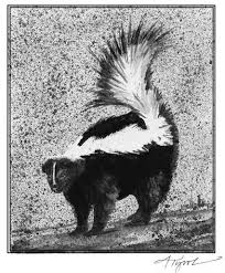 the winter life of the skunk the outside story