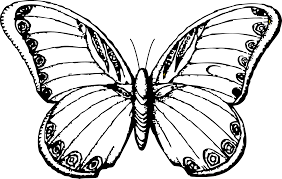 line drawings of butterflies free download clip art free clip