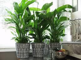 lutter contre l humidité dans une chambre combattre l humidité de l air grâce aux plantes déshumidificateurs