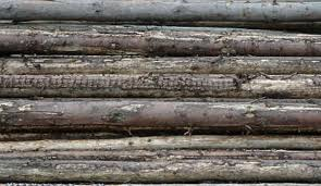 wood log wood log wall texture background images pictures