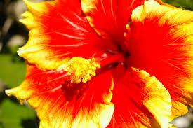 types of garden flowers dunneiv org