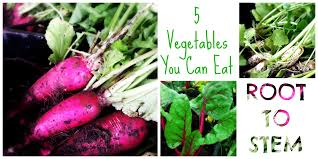 Green Root Vegetable - 5 vegetables you can eat root to stem gateway greening