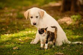 free kitten and puppy wallpaper hd long wallpapers