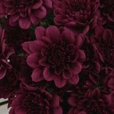 Dark Red Flower - untitled image 4546114 by owlpurist on favim com