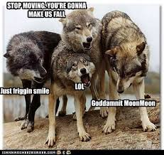 Wolf Memes - moon moon the wolf meme funny pinterest wolf meme meme and wolf