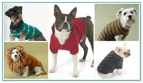 free easy crochet dog sweater patterns
